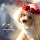 バレンタイン・レッドローズ花かんむり