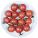 -井出トマト農園- ミニトマト プリンセスロゼ