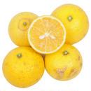 -神奈川県湯河原産- ゴールデンオレンジ / 黄金柑1kg  (自然栽培)