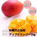 【お中元用】沖縄宮古島産アップルマンゴー美麗品1kg