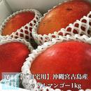 【ご自宅用】格安アップルマンゴー1kg(農薬をほとんど使わないため見栄えの悪い規格外マンゴー。)