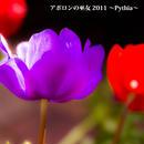 『アポロンの巫女 2011 〜Pythia〜』ハイレゾ音源