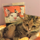 【NPO法人ツキネコ北海道】オリジナル卓上カレンダー2017