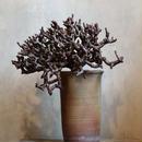 ペラルゴニム    ミラビレ no.07  Pelargonium mirabile