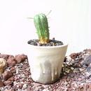 ユーフォルビア  バリダ  hyb.  仔吹きタイプ  no.023   Euphorbia valida  hyb.