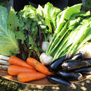 【毎月2回の定期便】野菜ボックス(毎月第1、第3週金曜日発送)