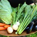 【お試し1回】野菜ボックス(金曜日発送 → 土曜日午前中着)
