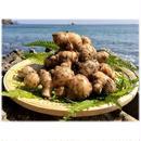 自然農法(無農薬・無化学肥料) 鰹乃國の生姜1kg[潮と空農園] made in 高知県