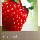 エコトバ帖  vol.3
