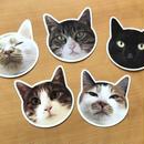 猫型ポストカード