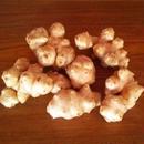 【食】完全無農薬 なかつえ 自然栽培 「菊芋」 500g(大分県中津江村産「櫻井家の完全自然栽培 菊芋」)新鮮な状態でお届けいたします!発送は三月一杯まで!!