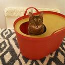 <砂が飛び散らない>上から入る猫トイレ<インテリアとしてもオシャレ> Uppifrån 【レッド】
