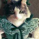 猫託ポストカード「スカーレットキャットオハラ」2枚セット
