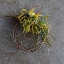 野の花屋 ミモザと雲竜柳のリース
