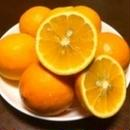 レモン【国産】5K化粧箱入り,送料無料, ギフト贈答用,お届け先ギフト指定可能 3/1から随時発送中