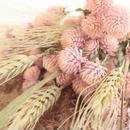 千日紅 pink bouquet