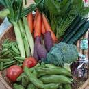 オーガニック野菜定期購入用入会金