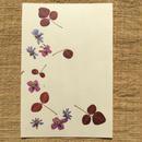 明日香オリジナルポストカードN03 (PostCard)