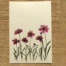 明日香オリジナルポストカードN01 (PostCard)