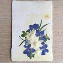 和紙はがきM08 (Post Card)
