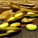 燻製の枝豆