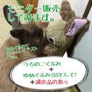 ぐるみセット☆スペシャリテ(モニター販売)