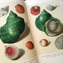 1936年ドイツ インゼル文庫Nr.158<海の奇跡の小さな図鑑>◆Das kleine Buch der Meereswunder