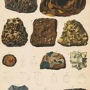 1878年鉱物画⑤<ドイツ>◆ アンティーク・クロモリトグラフ