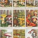 1950年 LIEBIG◆キノコ9種アンティーク・ビンテージカード