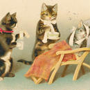 ◆H.Maguire 右手を怪我した猫と看病する優しい猫たち◆アンティークポストカード