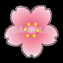 【POP素材】桜イラスト