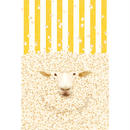 POSTCARD「popcorn」