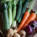 野菜セットS(ご利用が2回目以降)