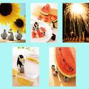 ペンギンポストカード 2016年夏