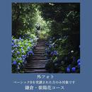 6月スマホでお散歩フォト(外フォト)紫陽花の鎌倉編 参加費