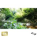 1004023 ■ 秋川渓谷 南秋川