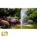 1033004 ■ 柿田川 噴水