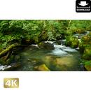 2035080 ■ 奥入瀬渓流 阿修羅の流れ