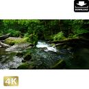 2035084 ■ 奥入瀬渓流 阿修羅の流れ
