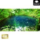2036004 ■ 白神山地 青池