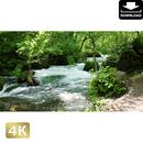 2035006 ■ 奥入瀬渓流