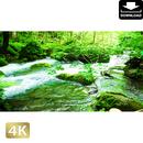 2035096 ■ 奥入瀬渓流 渓流