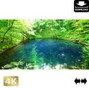 2036005 ■ 白神山地 青池