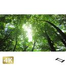 1003002 ■ 日光 中禅寺湖畔 樹木