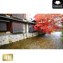 2043063 ■ 京都 祇園白川