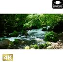 2035015 ■ 奥入瀬渓流 阿修羅の流れ