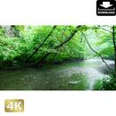 2035077 ■ 奥入瀬渓流