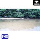 4022001 ■ 石垣島 吹通川ヒルギ群落