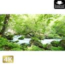 2035035 ■ 奥入瀬渓流 石ヶ戸の瀬