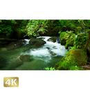 1035085 ■ 奥入瀬渓流 阿修羅の流れ